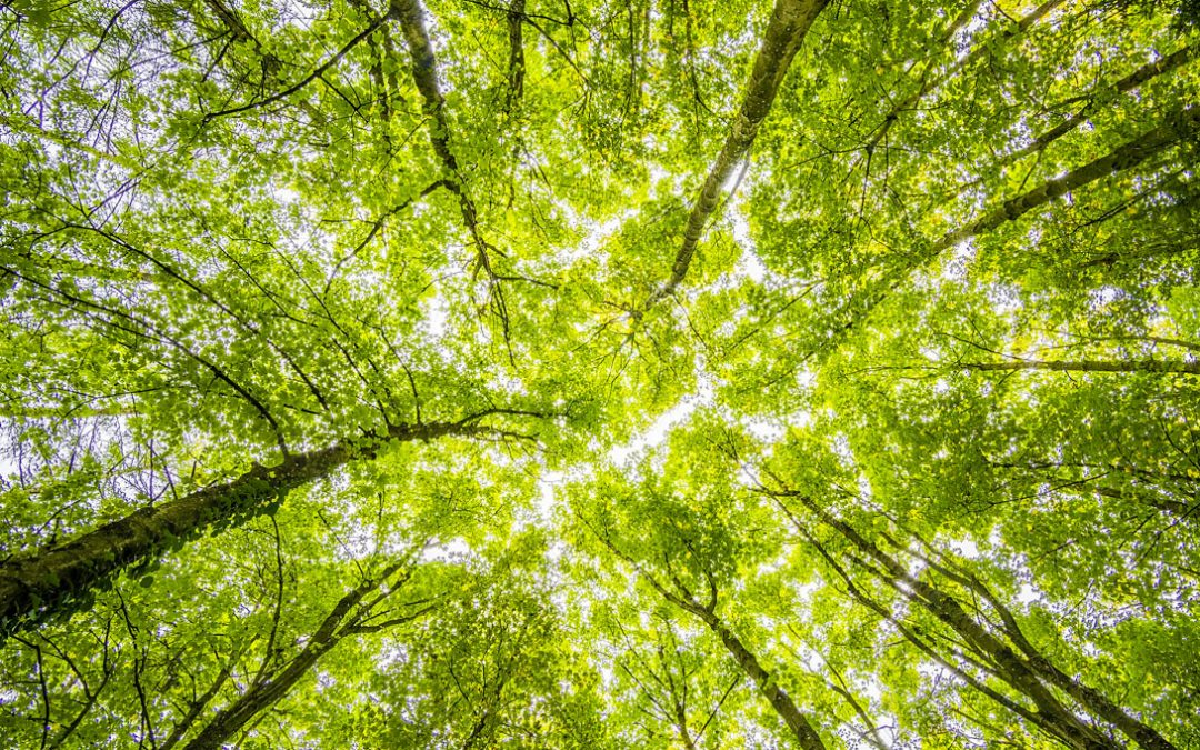 Consumers Expect Brands to Protect the Environment Rather Than Government Regulations